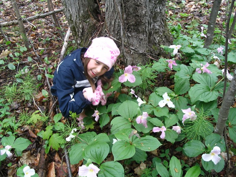 Alex and the Trilliums