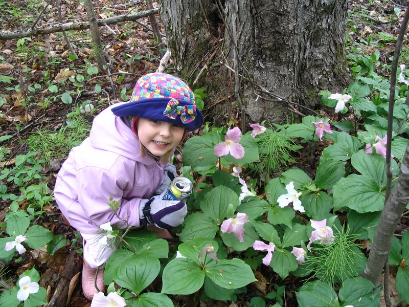 Emma and the Trilliums