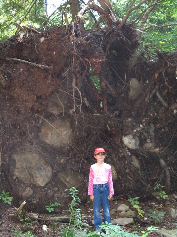 Alex and the Fallen tree